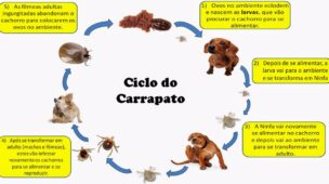 Ciclo do carrapato