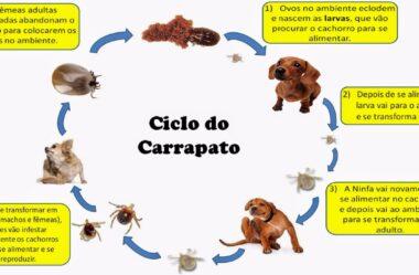 Como Acabar com Carrapatos